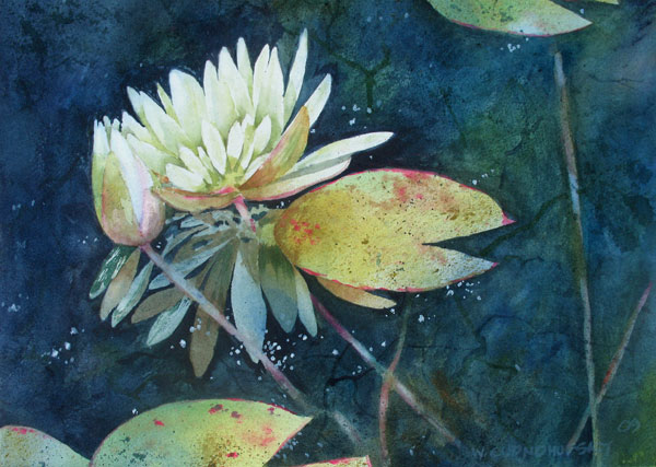 Waterlily-the-Bud